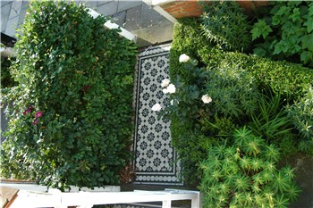 Breeze Garden Design Informal front garden design with box