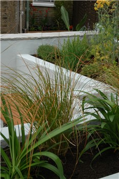 grasses carex and agapanthus - Garden Design Long Narrow Plot