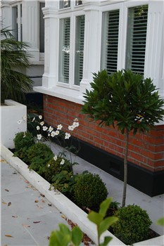 a stylish front garden box balls bay and japanese anemones
